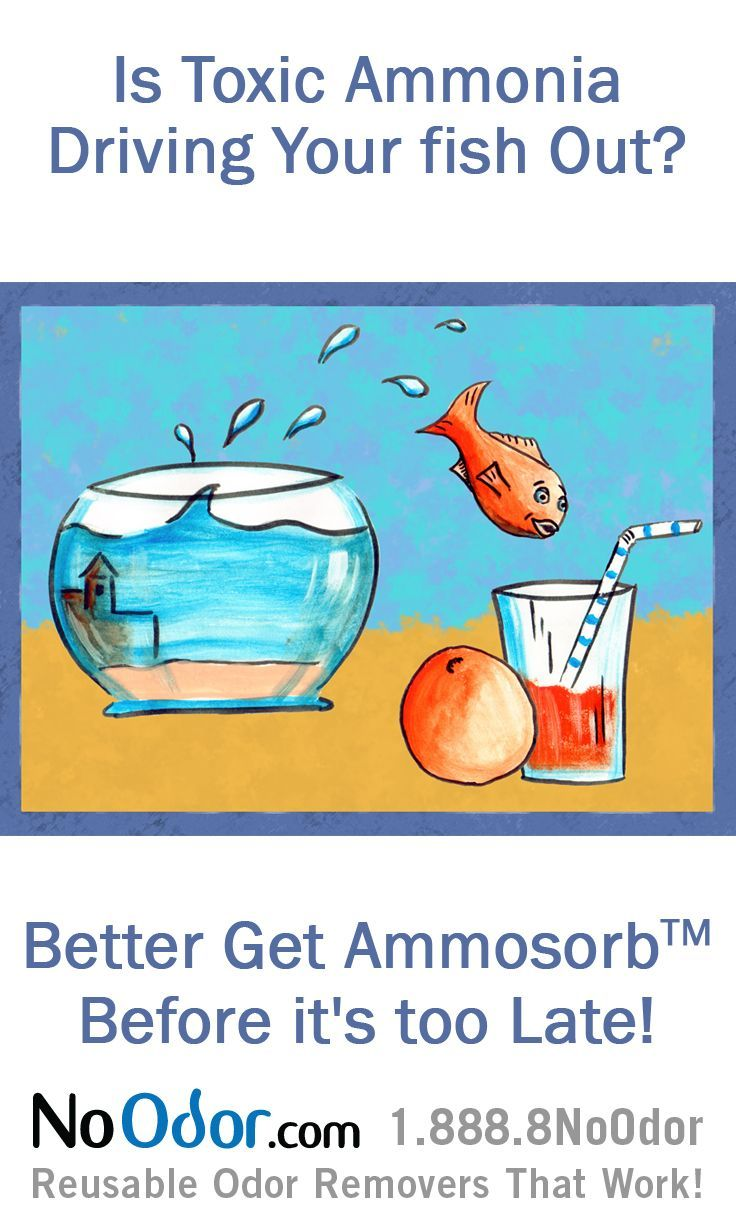 14 best ammonia smell solutions images on pinterest for Fish tank stinks