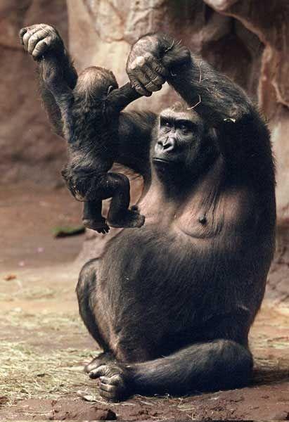 macaco treinando filhote