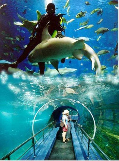 Beijing?s Pacific Underwater World