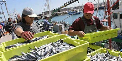 Publican las bases reguladoras para las ayudas a la paralización definitiva de la actividad pesquera