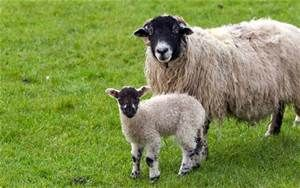 Schaap - Yahoo Image Search Results