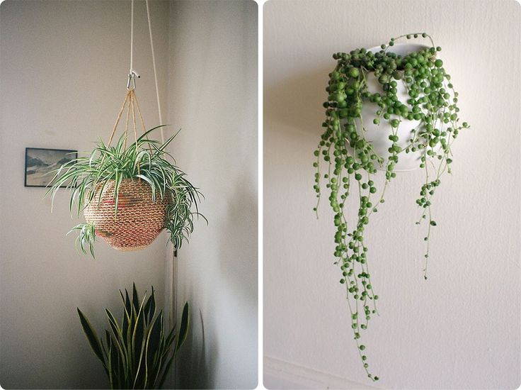 Decoration Images For > Indoor Spider Plants With White Vase And Minimalist Modern Hanging Plants Indoors Ideas Design Home Accessories Modern Hanging Plants Indoors Ideas Design