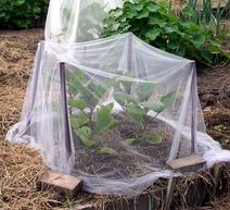 Use row covers instead of pesticides to protect plants from pests