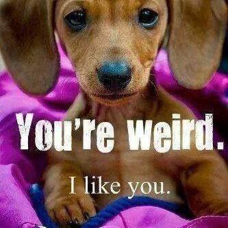 Dachshund - You're weird. I like you.