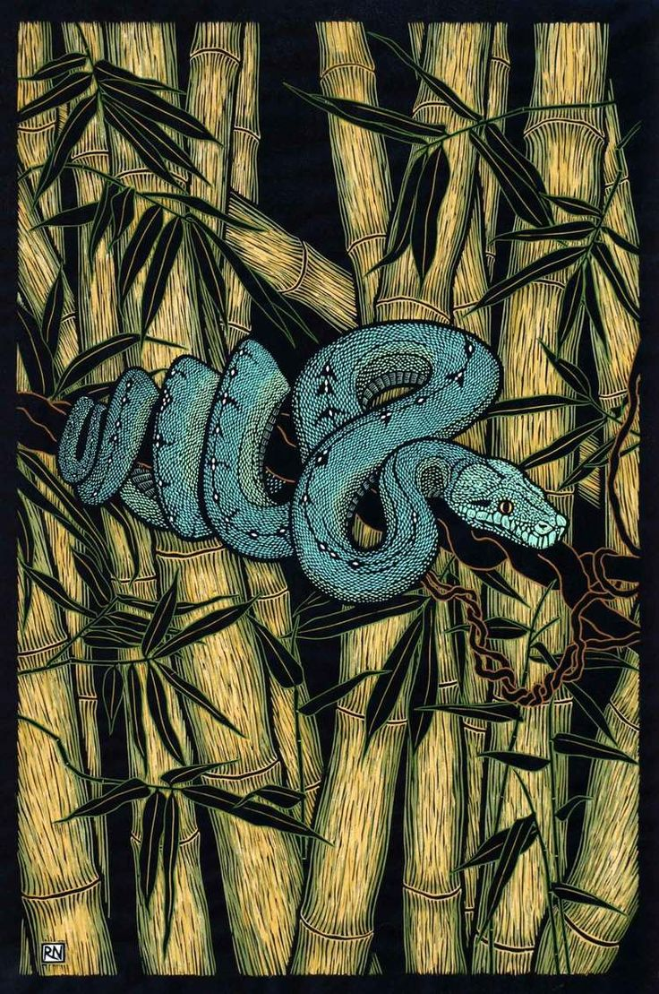 GREEN TREE PYTHON 76 X 50.5 CM    EDITION OF 50 HAND COLOURED LINOCUT ON HANDMADE JAPANESE PAPER $1,250