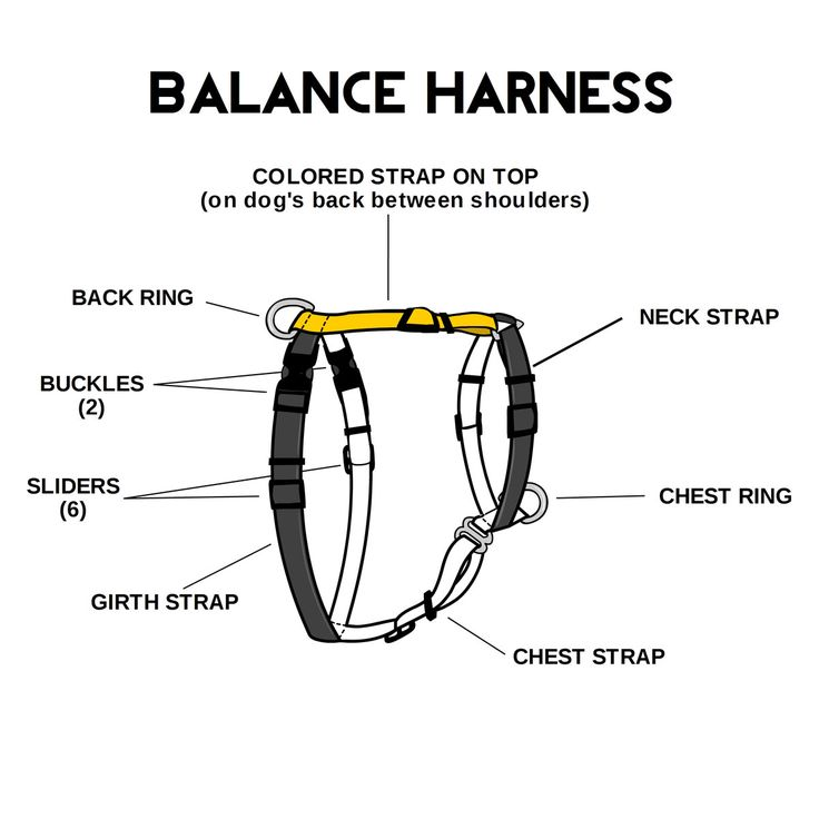 """Balance Harness, instead of a """"NoPull"""" Harness which may"""