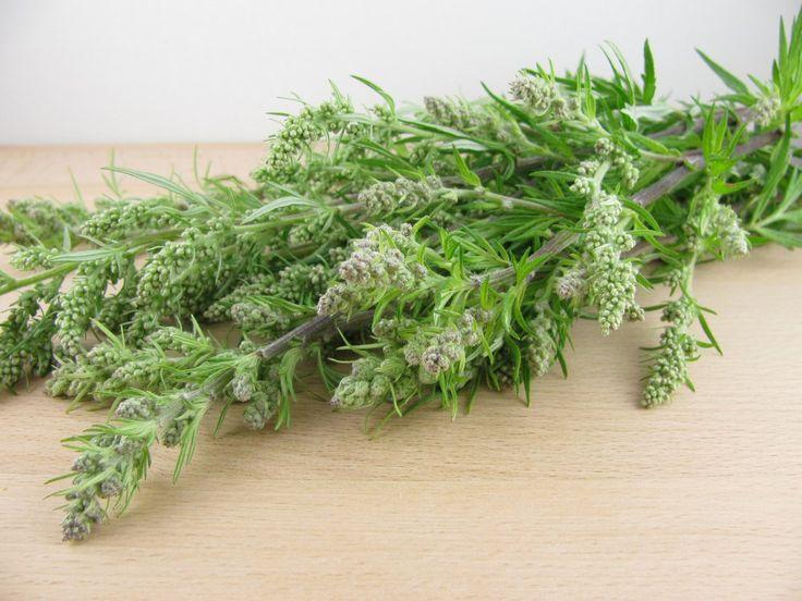 Znana od starożytności roślinka nazywana także piołunem. Jej nazwa pochodzi od…