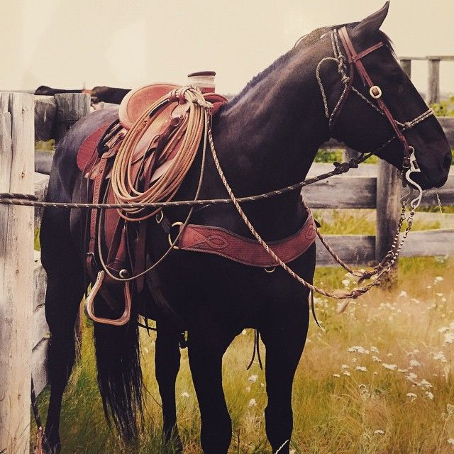Love the feeling of looking at your horse and he looks elegant and free