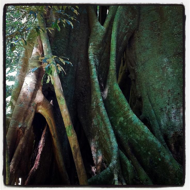 At the Mary Caincross Rainforest Gardens, near Maleny QLD.