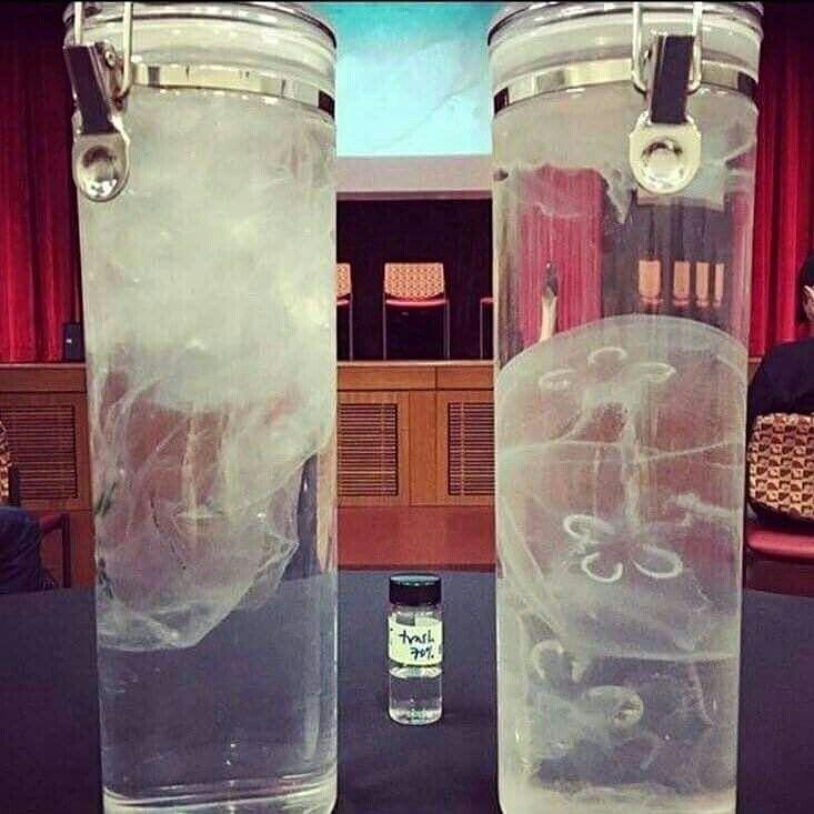 En un bote hay bolsas y en el otro medusas ves la diferencia? Muchas tortugas marinas y otro animales que comen medusas no la ven y terminan muriendo por comer plásticos. No tires basura a nuestros mares! #madusas #plasticos #tortugas #basura #mares #mar