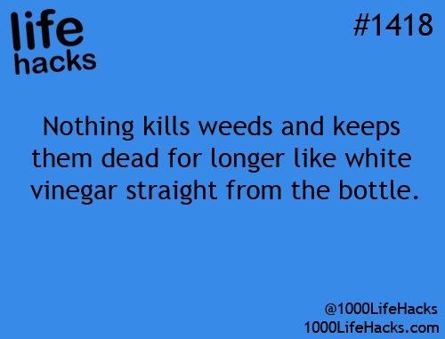 Nothing kills weeds and keeps them dead for longer like white vinegar straight from the bottle.