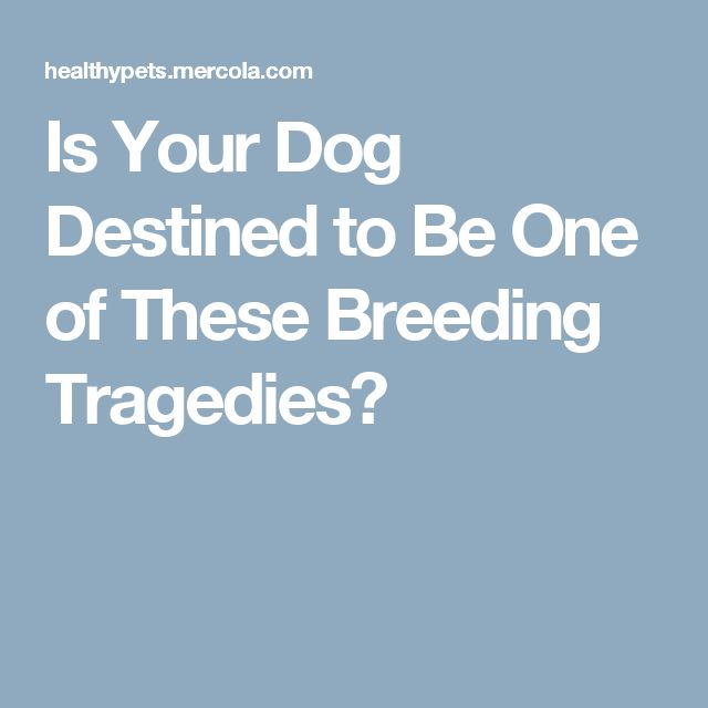 Is Your Dog Destined to Be One of These Breeding Tragedies?