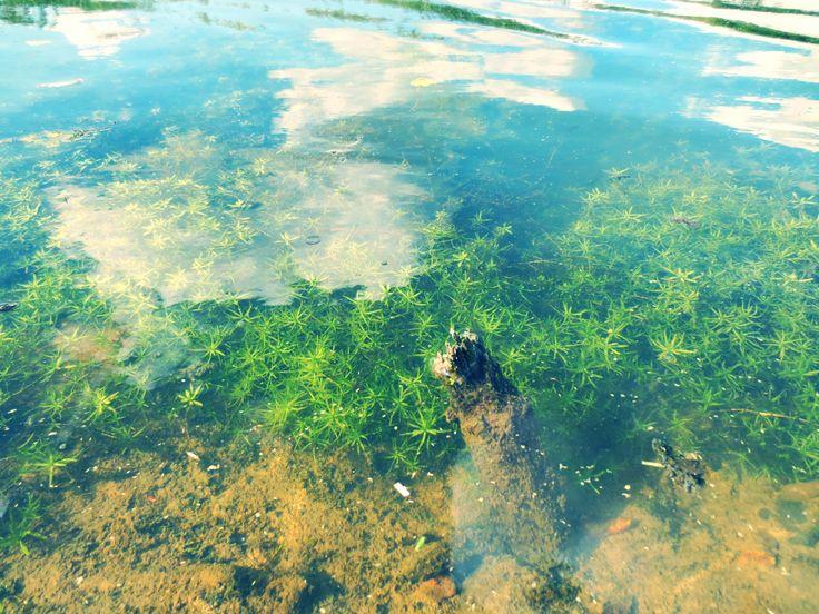 langs de water kant in de biesbosch