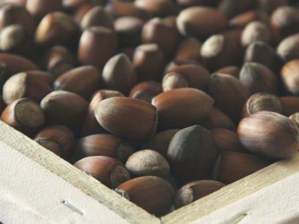 Fusilli integrali con pesto di nocciole e basilico: la ricetta per la pasta a base di nocciole, pomodori e basilico
