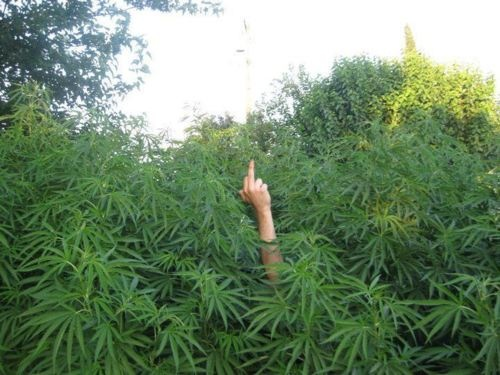 finger from the bushes