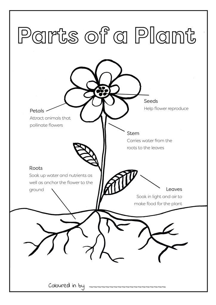 Parts Of A Plant Colouring Printable Free Download Parts Of A Plant Free Printables Colouring Printables