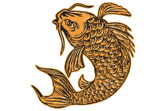 Koi Nishikigoi Carp Fish Jumping Etc - Illustrations - 1