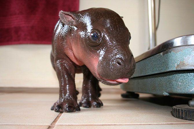 Самые милые детеныши животных за 2012 год
