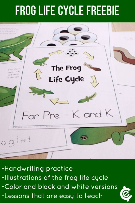 FREE Frog Life Cycle Learning Materials Download!