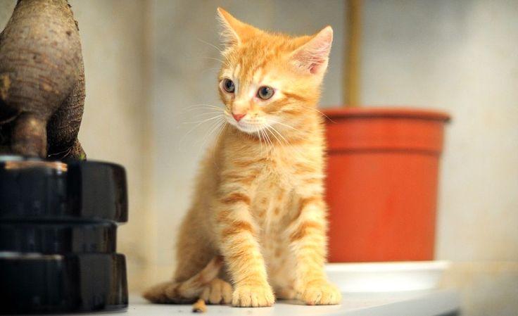 """Котёнок Ту (2). Котёнок, примерно 3 месяца. Тема на форуме Благотворительного Фонда """"Сохрани Жизнь"""" - http://save-life.me/forum/viewtopic.php?f=22&t=4517 . Нашёл Дом!"""