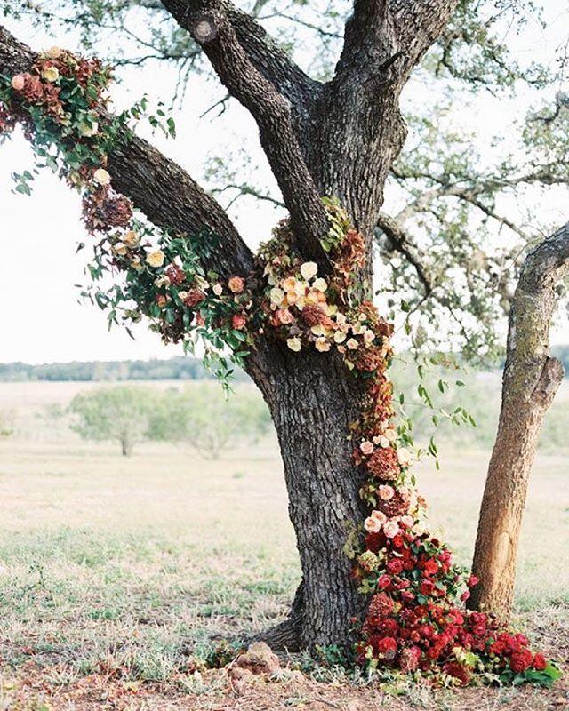 Ceremony by a tree? This is a must.  Image c/o @greenweddingshoes  Design, styling & florals by @thenouveauromantics Shot by @taylorlord  #wedding #weddingday #weddings #weddinginspiration #weddingideas #autumn #autumnwedding #fall #fallwedding #bride #bridal #brides #brideandgroom #bridalinspiration #bohostyle #bohobride #bohemian #alternativebride #weddingceremony #ceremony #weddingflowers