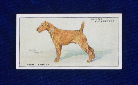 1933 Irish terrier portrait Wills cigarette card from England. Beautiful art by famous English painter Arthur Wardle. Vintage cigarette cards are fun to collect by breed. Great little gift to slip inside a greeting card!
