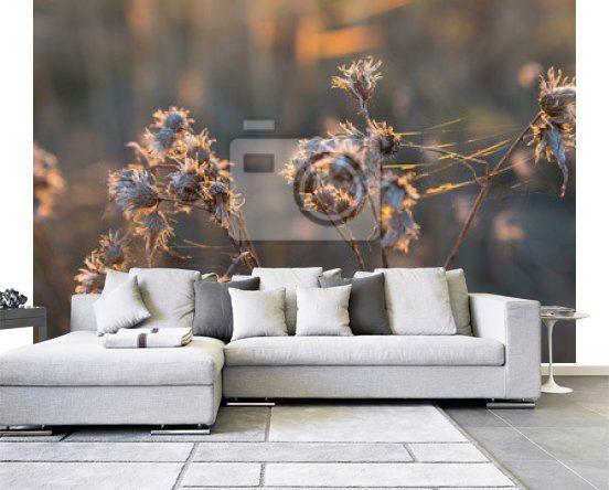Fototapeta Suche dzikie kwiaty na łące jesienią na wymiar • złoto, żółty, piękno • REDRO.pl