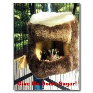 Sugar Glider in Furry Tree Truck Hanging Bed #Postcards #sugarglider #posters on #blog #animal posters on a #Budget