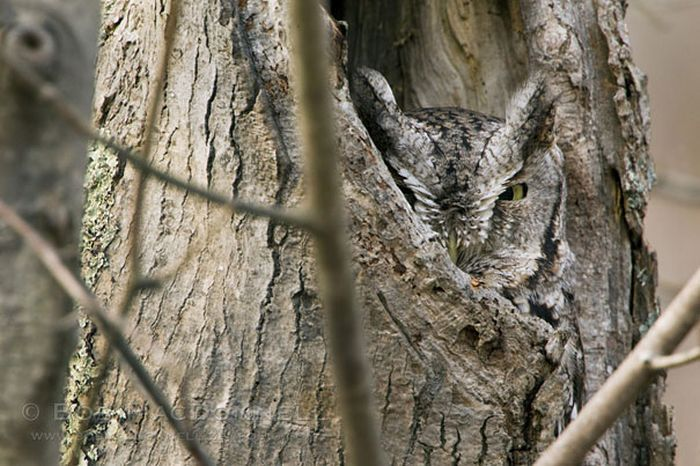 #owl #hole in the tree