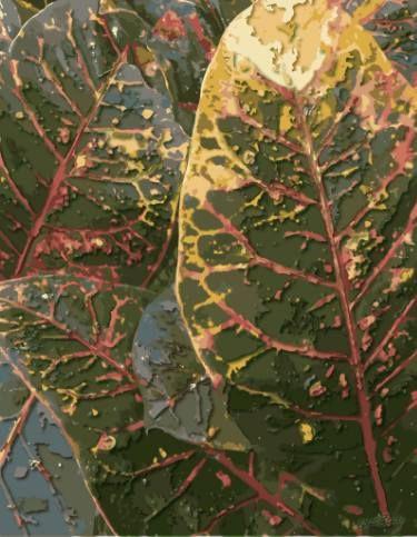 Tea Leaf Acne