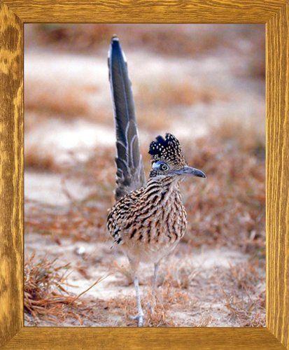 Greater Roadrunner Wild Bird Wall Decor Brown Rust Framed... https://www.amazon.com/dp/B00HFO3T70/ref=cm_sw_r_pi_dp_x_SUqqybY5N0CAC