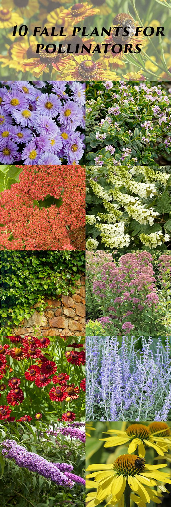 25 Best Ideas About Fall Planting On Pinterest Fall Planting Vegetables Fall Planting Guide