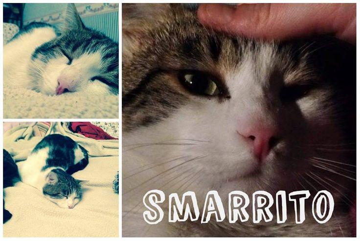 Smarrito TINO a Spadarolo GENNAIO 2016. Gatto maschio di circa un anno e mezzo. Non castrato. Il gatto è bianco con la schiena e la coda scura.  Ha una macchiolina accanto al nasino color caffè. Chi avesse notizie: 3466075109. grazie