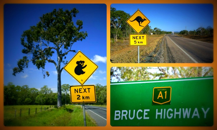 I'll be on the lookout for koalas and kangaroos when traveling down the Bruce Highway.
