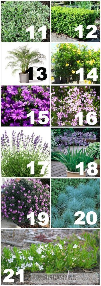 Hometalk | Native, Drought Tolerant Plants for Your Yard