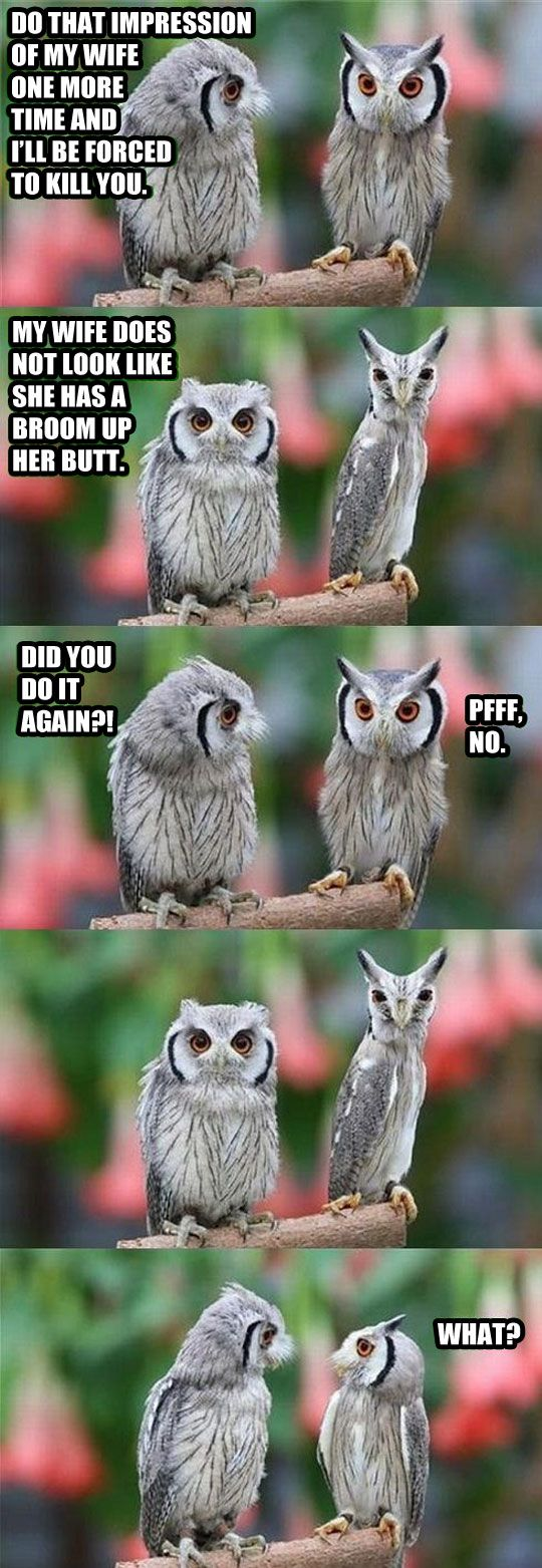 Sometimes owls can be jerks.