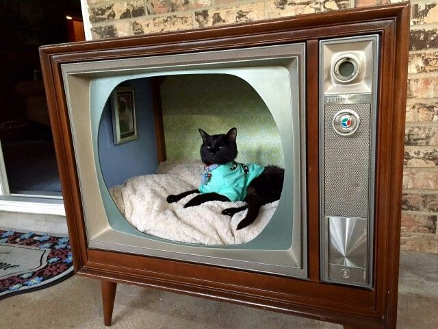 Retro modern kitty cat condo