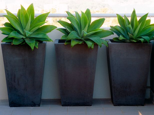 Design Ideas For Container Gardens. Agave PlantBlack PlantersLarge Garden  ...