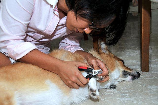 4 astuces pour couper les ongles de son chien sans aucun stress