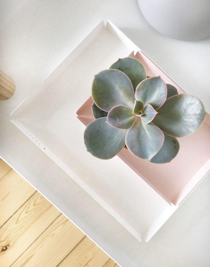 DIY lav dine egne sukkulent planter
