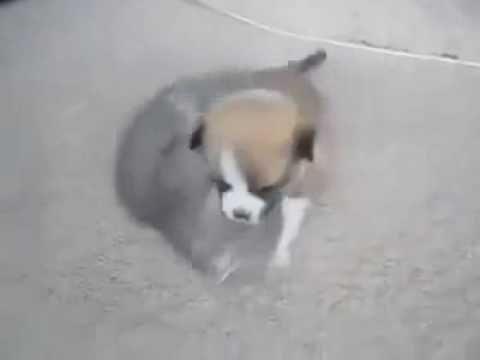 #Котенок и  #щенок  играют!  #Kitten #puppy play!