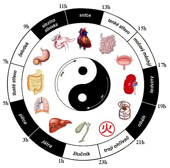 Podle čínské medicíny mají jednotlivé orgány své energetické špičky i propady. Při nemoci je dobré zaměřit se na to, v jakou dobu symptomy zesilují. To může ukazovat k souvislosti s určitým orgánem…