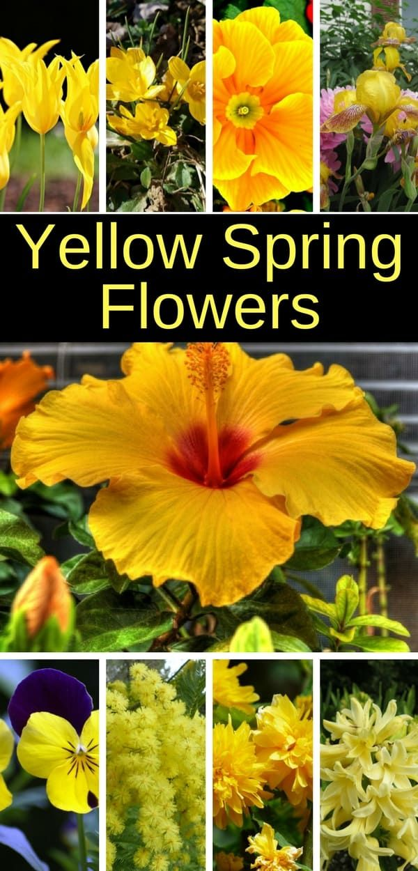 11 yellow spring flowers that will energize your garden. #spring #springflowers #gardening #home