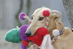 What a sweet photo! Learn more about Fast Friends Greyhound Rescue at: http://www.greytdogs.org/