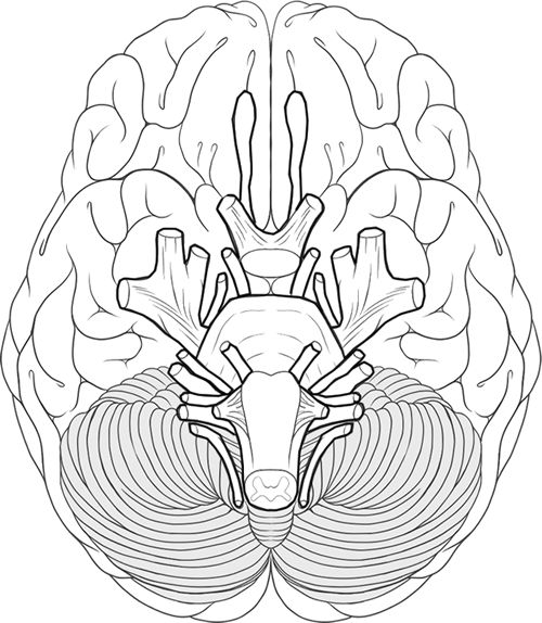 468 best Human Body Unit images on Pinterest High school science - new coloring pages blood blood consists of plasma and formed elements