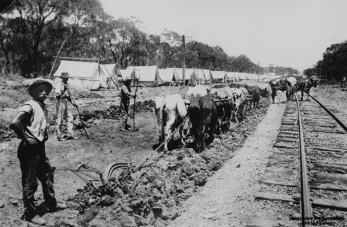 Bullock teams working along the railway line at Chinchilla, Queensland, ca. 1895