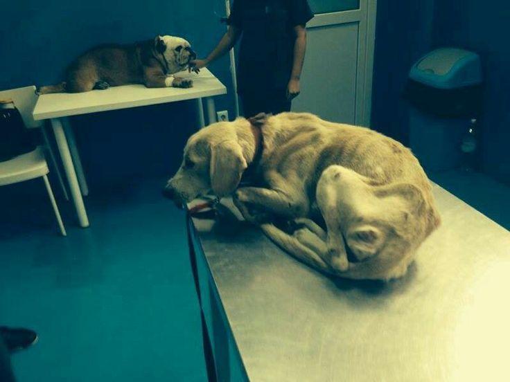 Fetita Bellei...in timpul operatiunii de salvare..fara cuvinte... Din fericire a recuperat..
