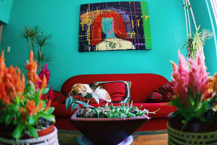 Dogs 🐶  are the best decor . They complete the space 😍🌺🌈 #myhousethismonth #showmeyourboho 🌵art ex @maljevicmaja #davidkrutgallery
