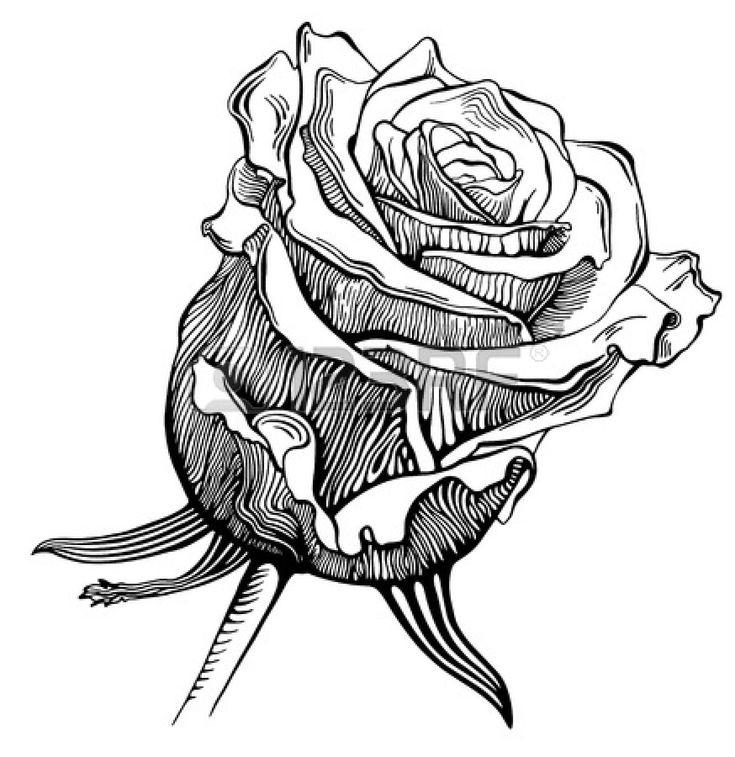 Easy Rose Drawings In Black And White