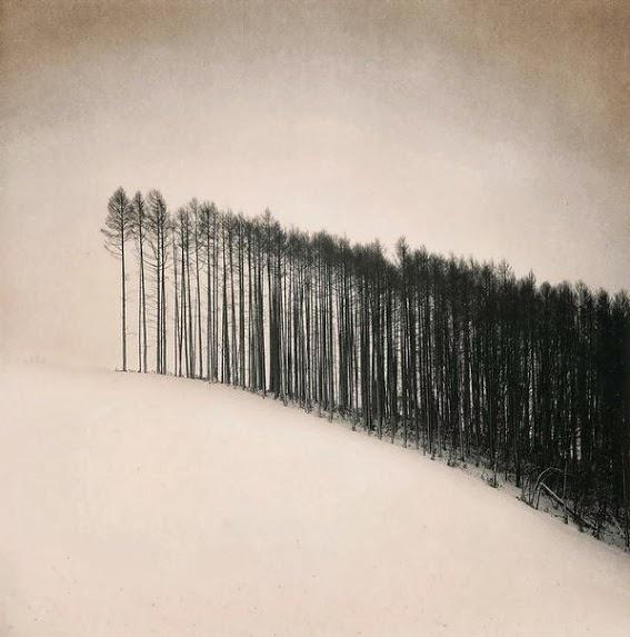 Forest Edge, Hokuto, Hokkaido, 2004 by Michael   K e n n a (567×573)